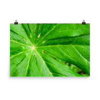 Peaceful Greenery Botanical Nature Photo Loose Unframed Wall Art Prints  - PIPAFINEART