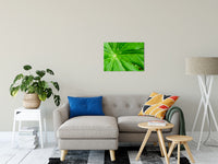 "Peaceful Greenery Botanical / Nature Photo Fine Art Canvas Wall Art Prints 20"" x 24"" / Fine Art Canvas - PIPAFINEART"