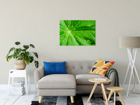 "Peaceful Greenery Botanical / Nature Photo Fine Art Canvas Wall Art Prints 24"" x 36"" / Fine Art Canvas - PIPAFINEART"