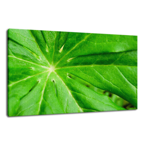 Peaceful Greenery Botanical / Nature Photo Fine Art Canvas Wall Art Prints