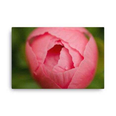 Peony Bud Floral Nature Canvas Wall Art Prints