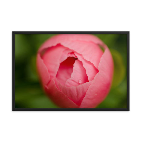 Peony Bud Floral Nature Photo Framed Wall Art Print