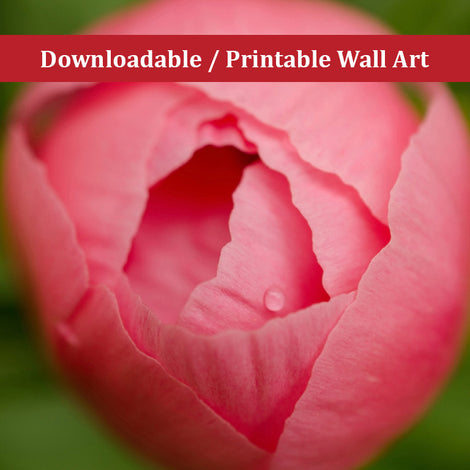 Peony Bud Floral Nature Photo DIY Wall Decor Instant Download Print - Printable