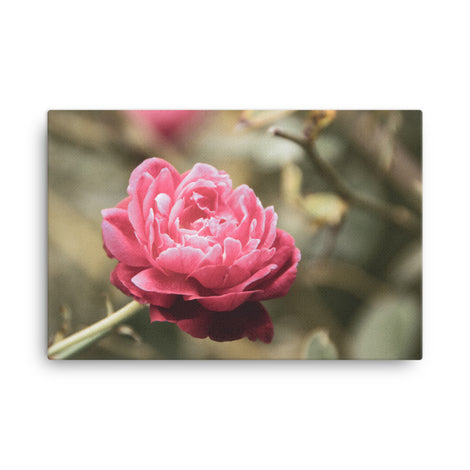 Perfect Petals Colorized Floral Nature Canvas Wall Art Prints