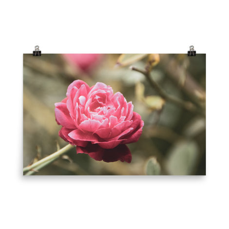 Perfect Petals Colorized Floral Nature Photo Loose Unframed Wall Art Prints