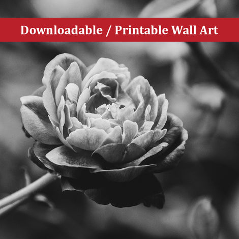 Perfect Petals Black and White Nature Photo DIY Wall Decor Instant Download Print - Printable