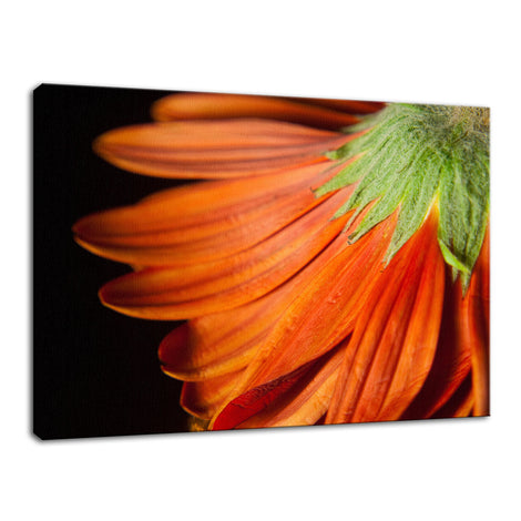 Petite Petals Nature / Floral Photo Fine Art Canvas Wall Art Prints