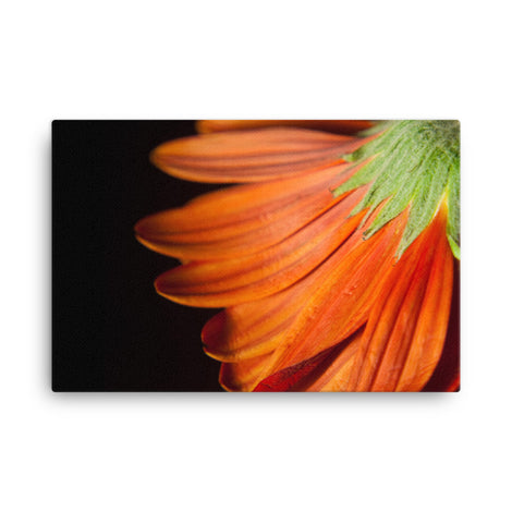 Petite Petals Floral Nature Canvas Wall Art Prints