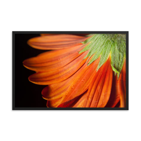 Petite Petals Floral Nature Photo Framed Wall Art Print