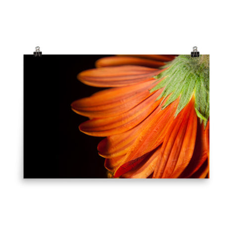 Petite Petals Floral Nature Photo Loose Unframed Wall Art Prints