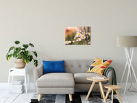 "Philadelphia Fleabane Cluster Softened Floral Photo Fine Art Canvas Wall Art Prints 20"" x 24"" - PIPAFINEART"