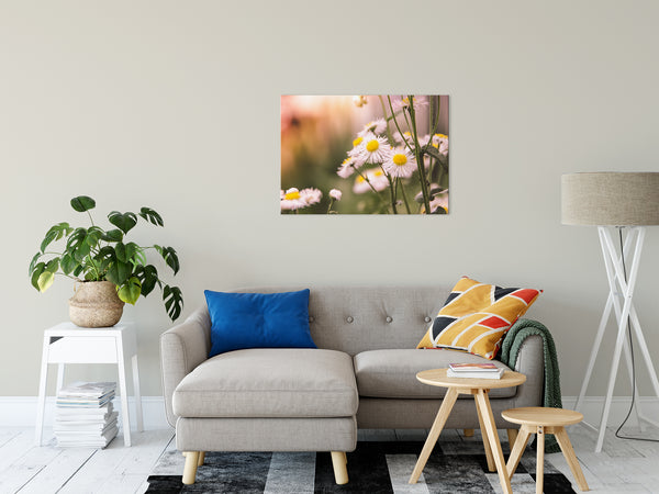 "Philadelphia Fleabane Cluster Softened Floral Photo Fine Art Canvas Wall Art Prints 24"" x 36"" - PIPAFINEART"