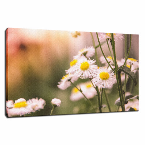 Philadelphia Fleabane Cluster Softened Floral Photo Fine Art Canvas Wall Art Prints