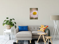 "Philadelphia Fleabane Single Bloom Floral Photo Fine Art Canvas Wall Art Prints 20"" x 24"" / Fine Art Canvas - PIPAFINEART"
