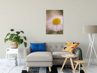 "Philadelphia Fleabane Single Bloom Floral Photo Fine Art Canvas Wall Art Prints 24"" x 36"" / Fine Art Canvas - PIPAFINEART"