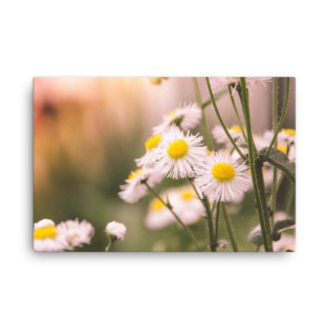 Philadelphia Fleabane Cluster Softened Floral Nature Canvas Wall Art Prints