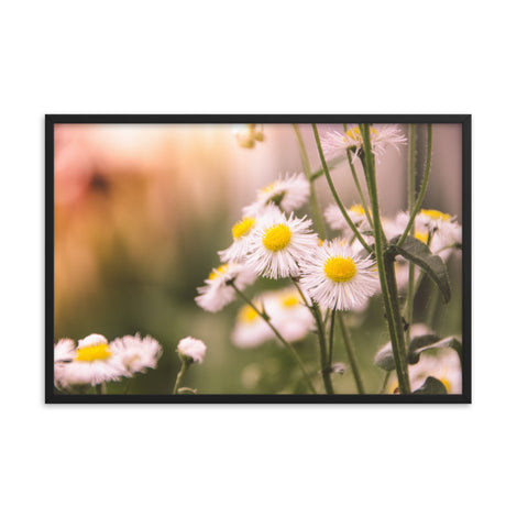 Philadelphia Fleabane Cluster Softened Floral Nature Photo Framed Wall Art Print