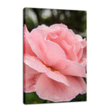 Pink Passion Nature / Floral Photo Fine Art Canvas Wall Art Prints  - PIPAFINEART