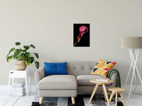 "Pink Calla Lily Flower on Black Nature / Floral Photo Fine Art Canvas Wall Art Prints 16"" x 20"" - PIPAFINEART"