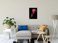 "Pink Calla Lily Flower on Black Nature / Floral Photo Fine Art Canvas Wall Art Prints 20"" x 24"" / Fine Art Canvas - PIPAFINEART"