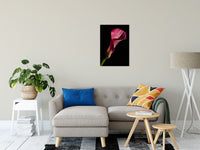 "Pink Calla Lily Flower on Black Nature / Floral Photo Fine Art Canvas Wall Art Prints 20"" x 30"" - PIPAFINEART"