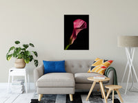 "Pink Calla Lily Flower on Black Nature / Floral Photo Fine Art Canvas Wall Art Prints 24"" x 36"" / Fine Art Canvas - PIPAFINEART"