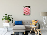 Floral Nature Photograph Pink Passion - Fine Art Canvas - Home Decor Unframed Wall Art Prints