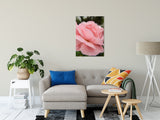 "Pink Passion Nature / Floral Photo Fine Art Canvas Wall Art Prints 24"" x 36"" / Fine Art Canvas - PIPAFINEART"