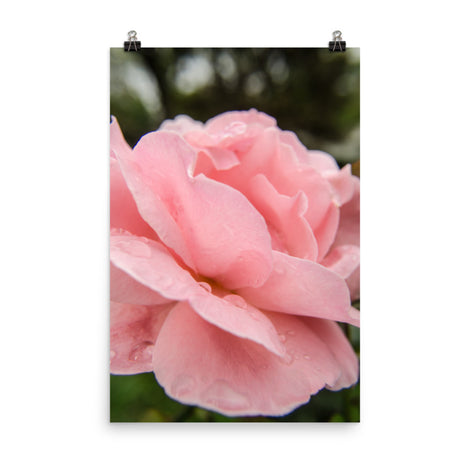 Pink Passion Floral Nature Photo Loose Unframed Wall Art Prints