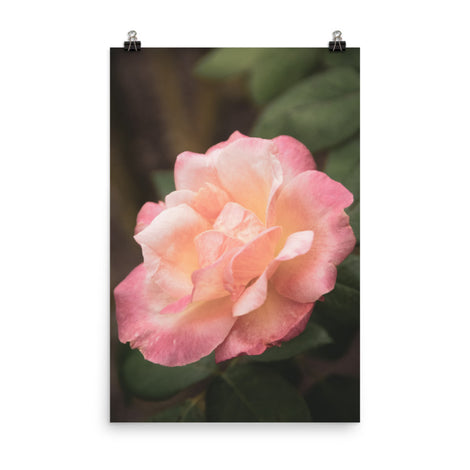 Pink and White Softened Rose Floral Nature Photo Loose Unframed Wall Art Prints