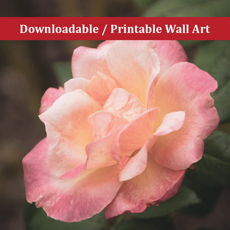 Pink and White Softened Rose Nature Photo DIY Wall Decor Instant Download Print - Printable