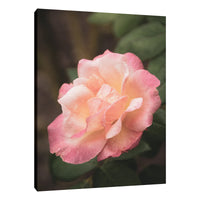 Pink and White Softened Rose Floral Nature Photo Fine Art Canvas Wall Art Prints  - PIPAFINEART