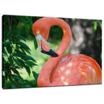 Pinky the Pink Flamingo Animal / Wildlife Photograph Fine Art Canvas & Unframed Wall Art Prints  - PIPAFINEART