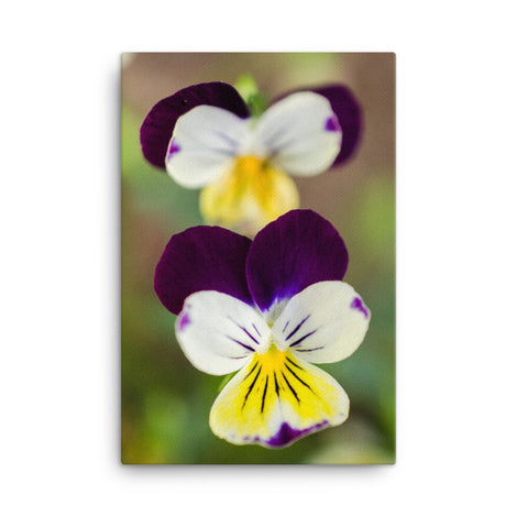 Pretty Little Violets Floral Nature Canvas Wall Art Prints