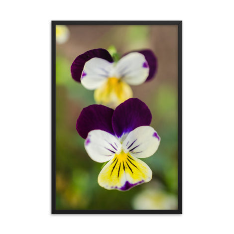 Pretty Little Violets Floral Nature Photo Framed Wall Art Print