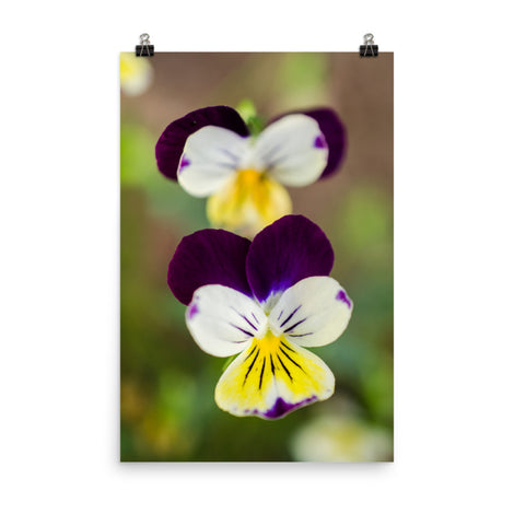Pretty Little Violets Floral Nature Photo Loose Unframed Wall Art Prints