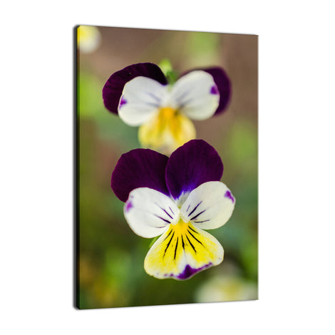 Pretty Little Violets Nature / Floral Photo Fine Art & Unframed Wall Art Prints
