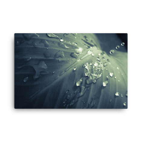 Rain Dropping on Canna Leaf Botanical Nature Canvas Wall Art Prints