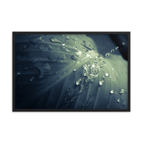 Rain Dropping on Canna Leaf Botanical Nature Photo Framed Wall Art Print