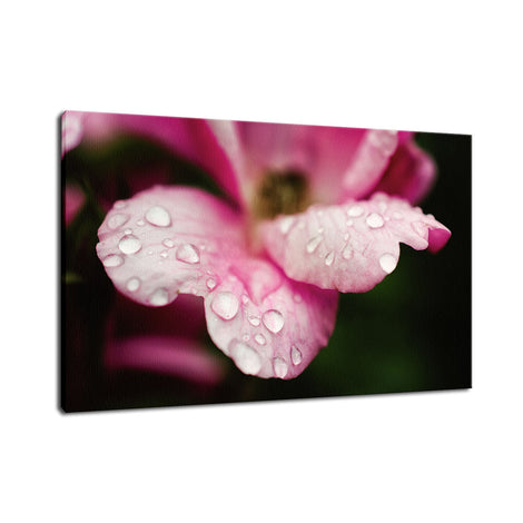 Raindrops on Wild Rose Nature / Floral Photo Fine Art Canvas Wall Art Prints