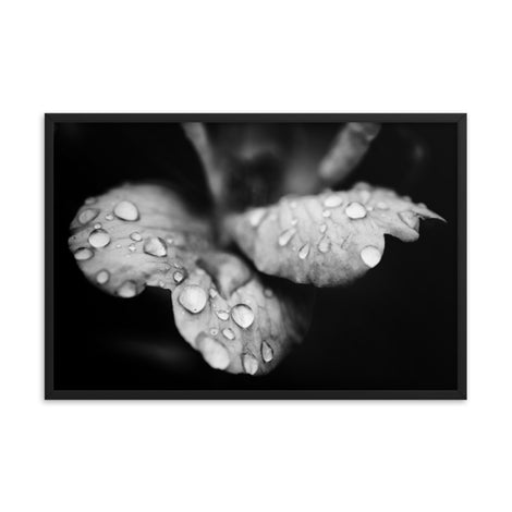 Raindrops on Wild Rose Black and White Floral Nature Photo Framed Wall Art Print