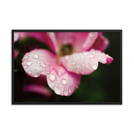 Raindrops on Wild Rose Color Floral Nature Photo Framed Wall Art Print