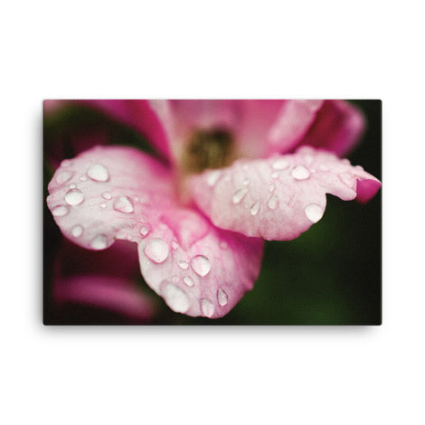Raindrops on Wild Rose Floral Nature Canvas Wall Art Prints