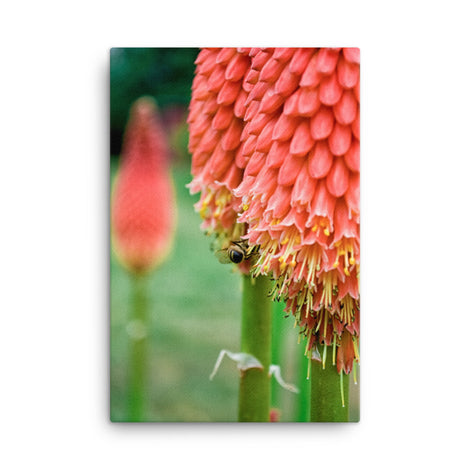Red Hot Pokers Floral Nature Canvas Wall Art Prints
