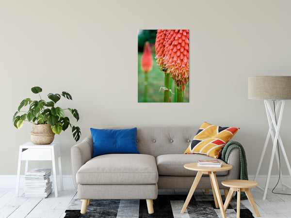 Floral Nature Photograph Red Hot Pokers - Fine Art Canvas - Home Decor Unframed Wall Art Prints