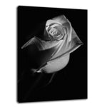Rose on Black Black & White Nature / Floral Photo Fine Art & Unframed Wall Art Prints - PIPAFINEART