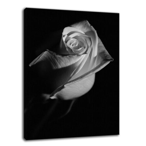 Rose on Black Black & White Nature / Floral Photo Fine Art Canvas Wall Art Prints