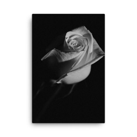 Rose on Black Black and White Floral Nature Canvas Wall Art Prints
