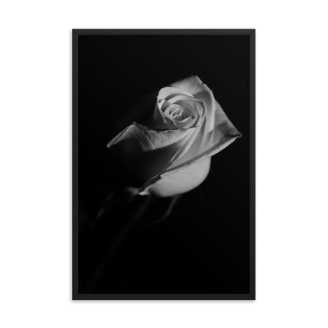 Rose on Black Black and White Floral Nature Photo Framed Wall Art Print