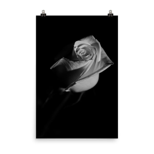 Rose on Black Black and White Floral Nature Photo Loose Unframed Wall Art Prints  - PIPAFINEART